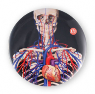Système cardiovasculaire 2